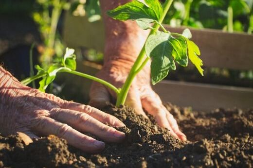 Which Vegetables to Plant in April